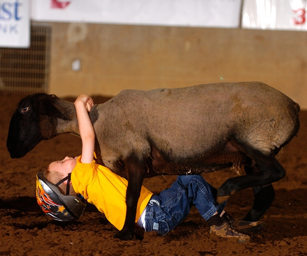franklin-rodeo-event-mutton-busting