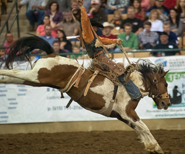 rodeo-events-saddle-bronc-riding