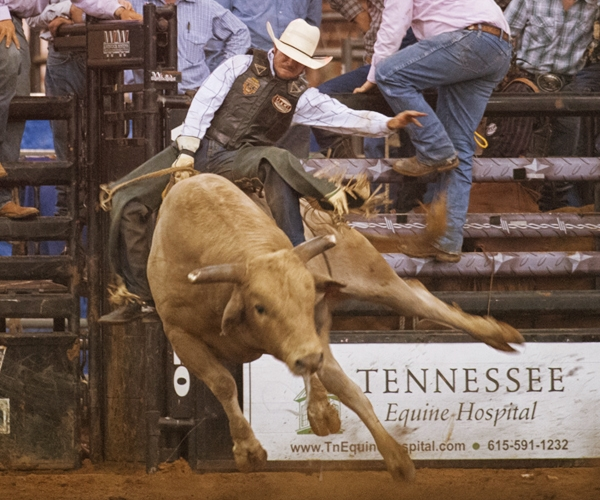 rodeo-events-bull-riding