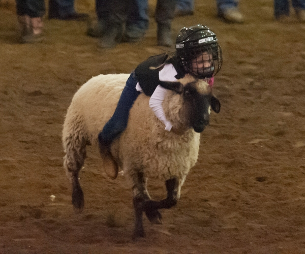 rodeo-events-mutton-bustin